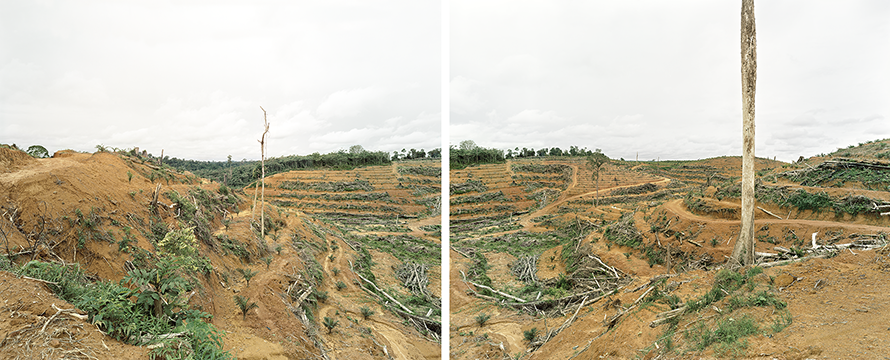 Diptych, Illegal deforestation of primary forest, Tumban Kalang, Central Kalimantan, Indonesia 03/2012, Series: Reading the Landscape