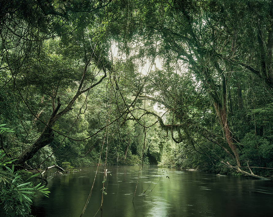 Primary forest 01, waterway, Malaysia 11/2013, Series: Reading the Landscape