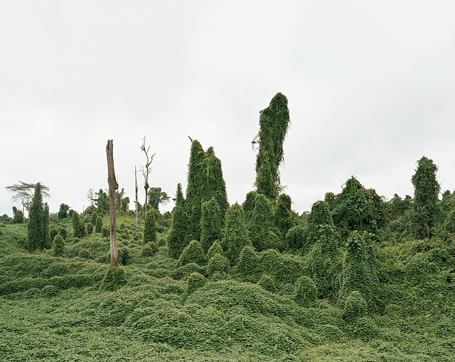 Ghost Trees after deforestation, Malaysia 10/2012, Series: Reading the Landscape