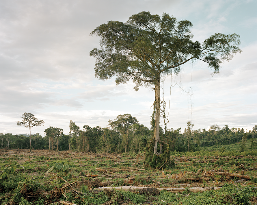Deforestation of primary forest, Central Kalimantan, Indonesia 03/2012, Series: Reading the Landscape
